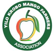 YILO KROBO MANGO FARMERS